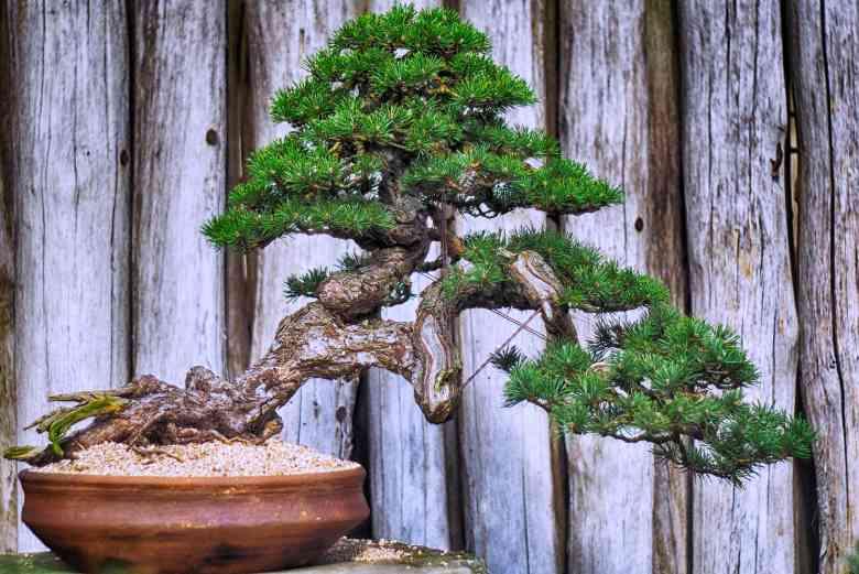 Bonsai contorto - Foto di Scartmyart