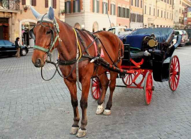 I cavalli delle botticelle romane: Cesare e gli altri