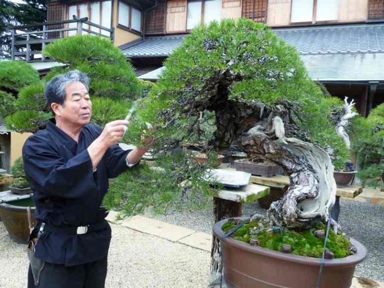 L'arte del bonsai tra bellezza e crudeltà
