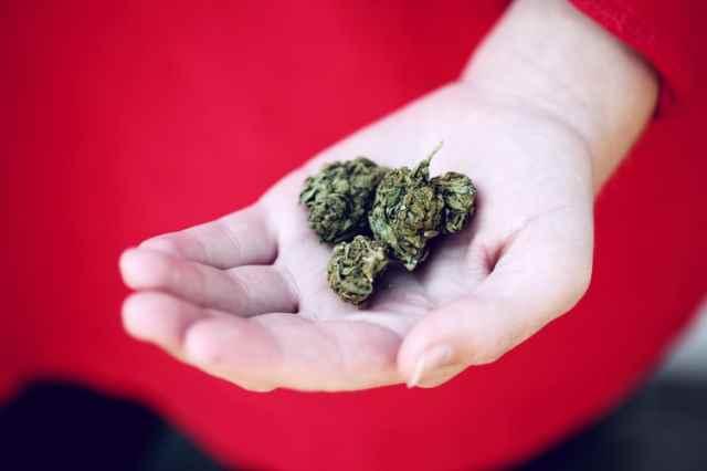 L'Onu ha depenalizzato la cannabis, ma perché è così stigmatizzata?