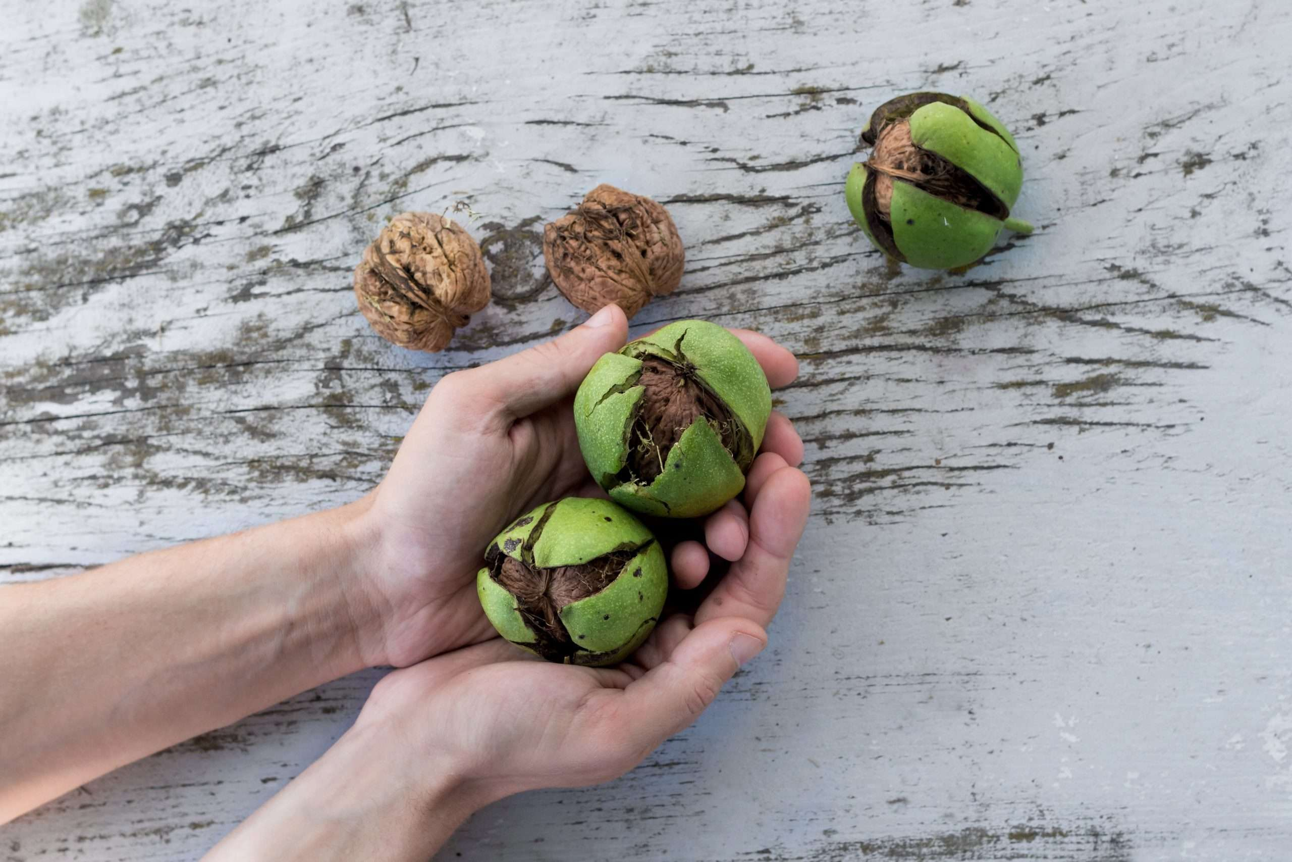 Nuts. Photo by NordWood Themes