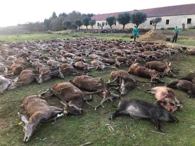 Orrore in Portogallo: oltre 500 animali sterminati in una battuta di caccia