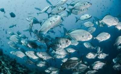Perché il consumo del pesce non è così salutare