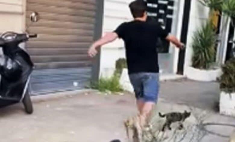 Uccidere a calci un gatto è l'anticamera della pericolosità sociale.
