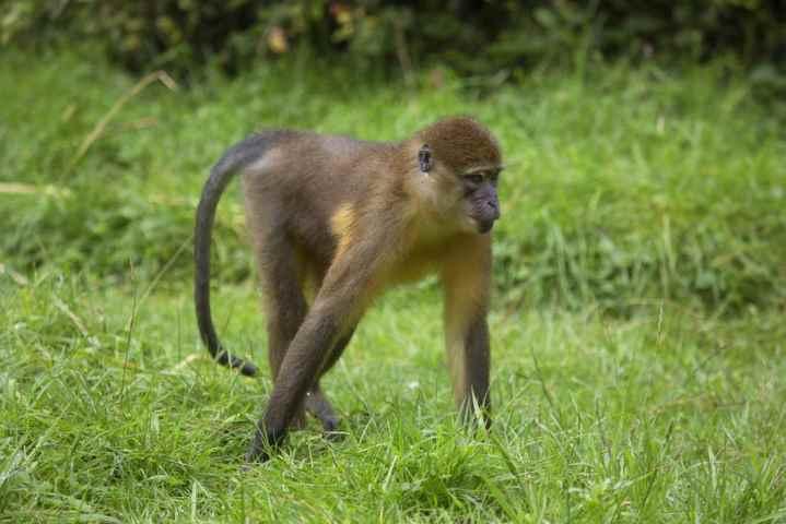 Usa, allarme 'vaiolo delle scimmie': scatta il tracciamento