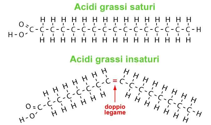 Acidi grassi-legami