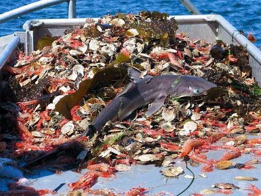 I danni della pesca a strascico